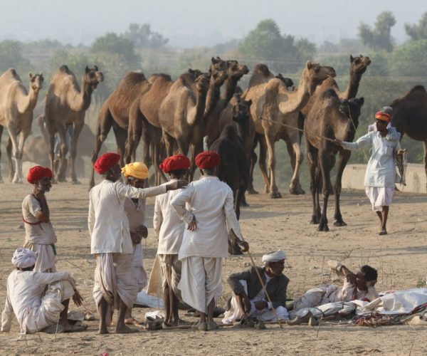 Kamelmarkt i Pushkar