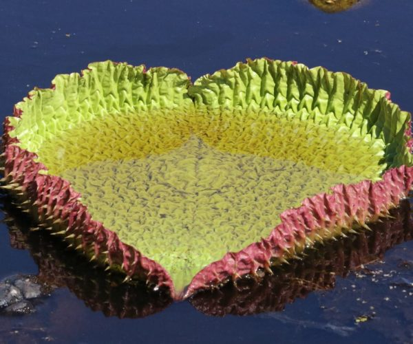 pantanal13