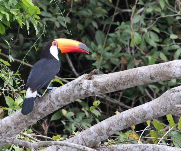 pantanal85