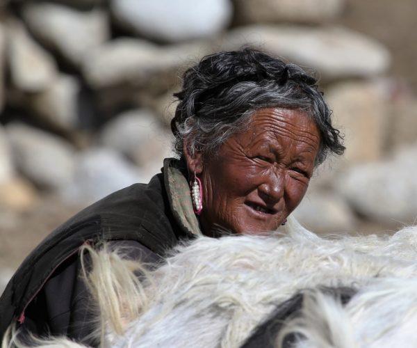 204 Es wird gemolken (Ladakh)