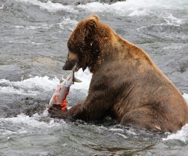 Alaska12